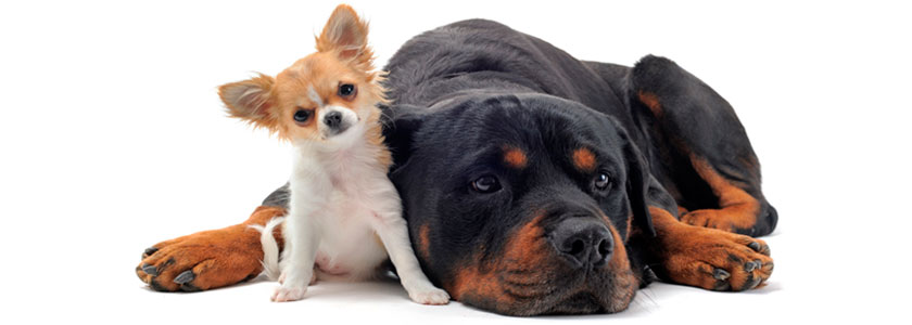 Animales Peligrosos - Centro Médico Tauro
